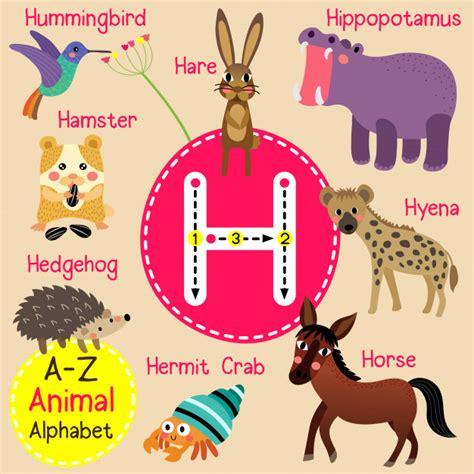 Letra h zoo alfabeto   Vector Premium