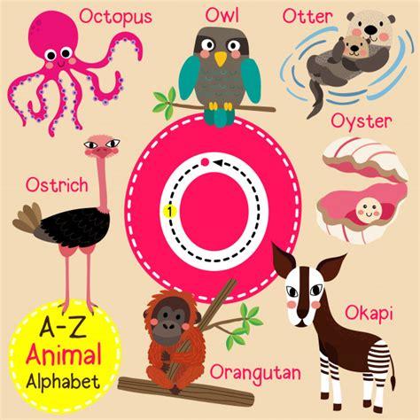 Letra o zoo alfabeto   Vector Premium