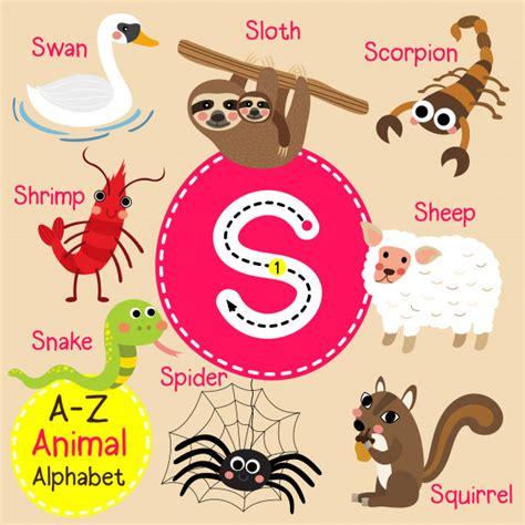 Letra s zoo alfabeto   Vector Premium