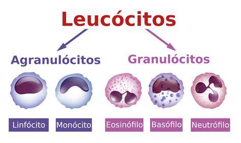 Leucograma   análise dos leucócitos do sangue   InfoEscola