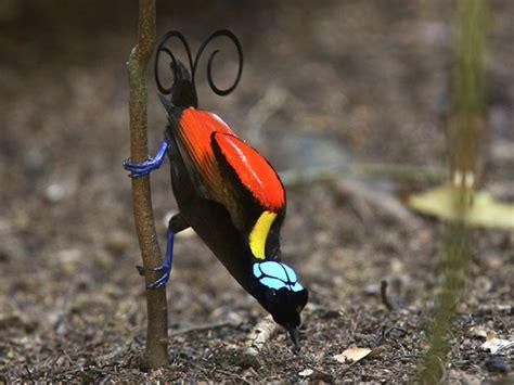 LIBERTAÇÃO ANIMAL: Pesquisadores registram 39 espécies de ...