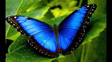 Lindas e raras borboletas   YouTube