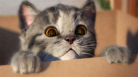 Lindo Gatito Solo en Casa   Cute Kitten Need a Home ...