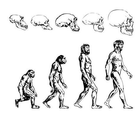 Linea de Tiempo de la Evolución del Hombre  Iris Rodríguez ...