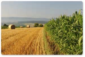 Líneas de financiación oficial   AgroBank   Empresas