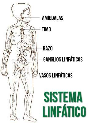 LINFOMA DE HODGKIN Y LINFOMA NO HODGKIN » MD.Saúde