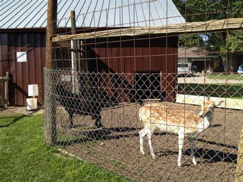 Lionel's Pony Farm & Petting Zoo   Stouffville, ON, Canada ...