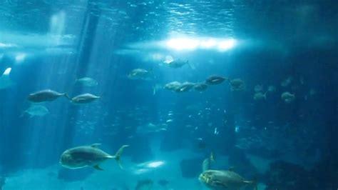 Lisbon Aquarium Oceanario de Lisboa   YouTube