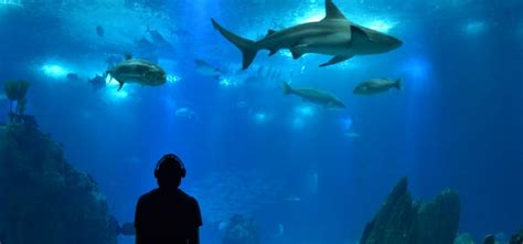 Lisbon Aquarium Oceanarium guide