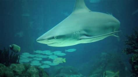 Lisbon Aquarium on Vimeo