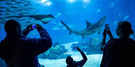 Lisbon City Guide: Parks and Attractions   Oceanário ...