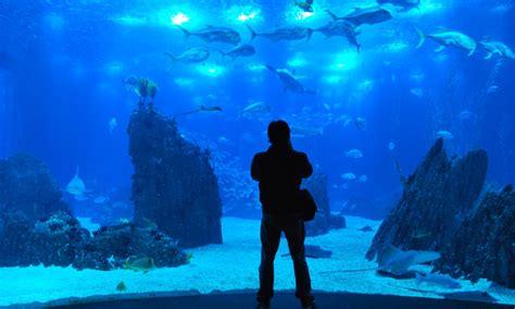 Lisbon Oceanarium   Aquarium   Updated 2020   Best Lisbon ...