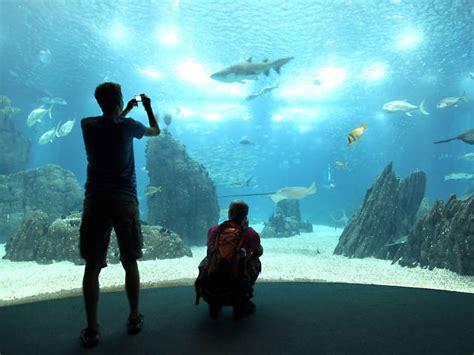 Lisbon Oceanarium | Attractions in Parque das Nações, Lisbon