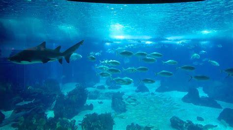 Lisbon Oceanarium in Lisbon, | Expedia