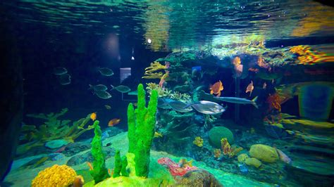 Lisbon Oceanarium   Lisbon, Attraction | Expedia.co.nz