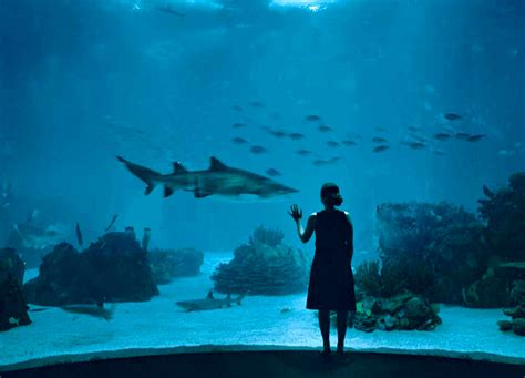 Lisbon Oceanarium   Lisbon, Parque das Nacoes | Wildlife ...