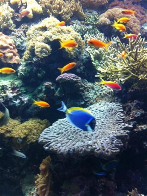 Lisbon Oceanarium  Portugal : Top Tips Before You Go ...