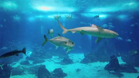 Lisbon Portugal Aquarium Oceanarium   YouTube