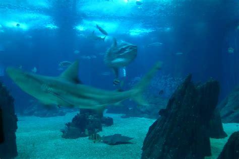 Lisbon s Aquarium/Oceanario de Lisboa