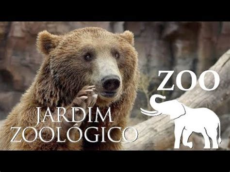 Lisbon Zoo   Bears & Birds   Portugal HD   YouTube