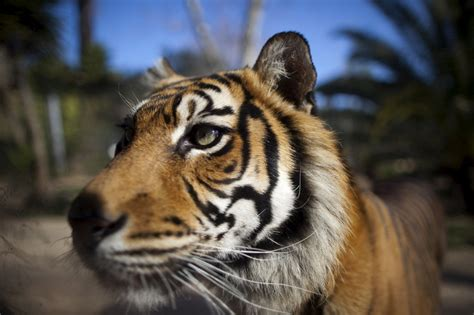 Lisbon Zoo   Updated 2019   Best Lisbon Travel Guide