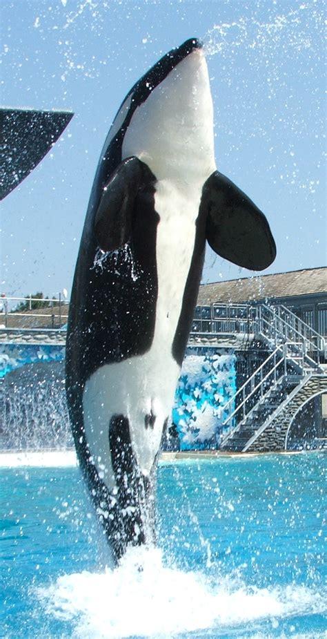 List of captive orcas   Wikipedia