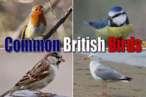 List of Common British Birds With Pictures & Facts For ...