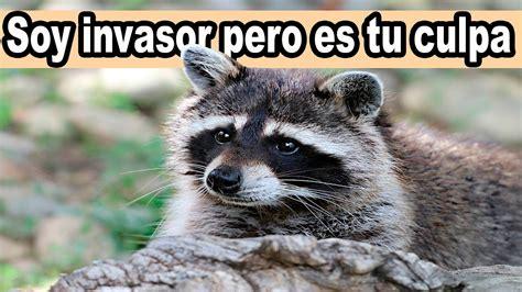 Lista 2019 Especies Exóticas Invasoras en España   YouTube