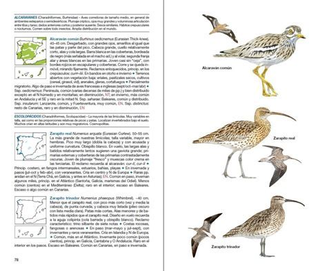 Lista Aves De Espana   SEO POSITIVO