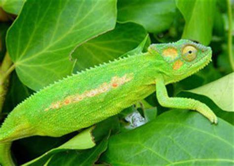 Lista de animales insectívoros: nombres y ejemplos