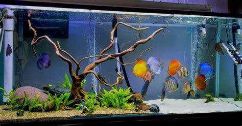 Lista de comprar peces para acuario