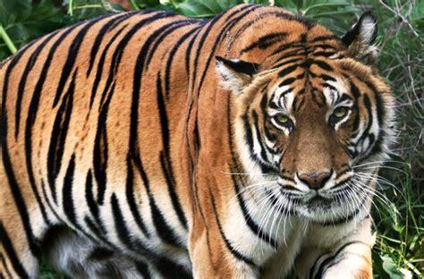Lista de especies amenazadas llega a cifra récord en el 2017