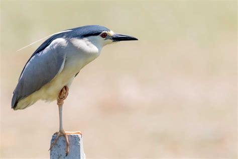 Lista de las Aves de España. Edición 2019   Biodiversidad ...