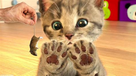 Little Kitten My Favourite Cat Play Fun Pet Care Game For ...