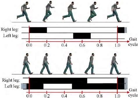 llustration of the duty factor. The duration of a gait ...