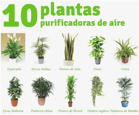 Lo Mejor De Datoonz = Tipos De Plantas ornamentales Y Sus ...