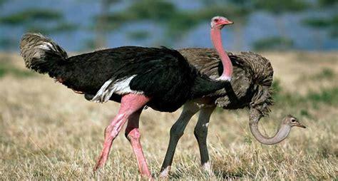 Lo que no sabías sobre las aves más grandes del mundo ...