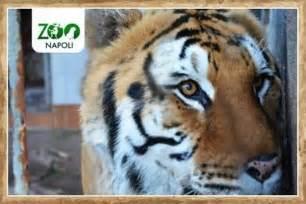 Lo Zoo di Napoli  Naples    2018 All You Need to Know ...