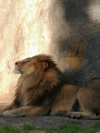 Lo Zoo di Napoli  Naples    2019 All You Need to Know ...