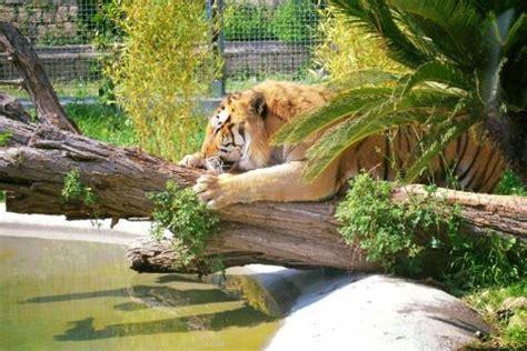 Lo Zoo Di Napoli, Naples | Reviews | Ticket Price ...