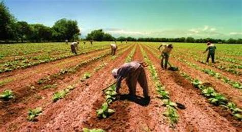 LOGROS IMPORTANTES PARA LA AGRICULTURA timeline ...
