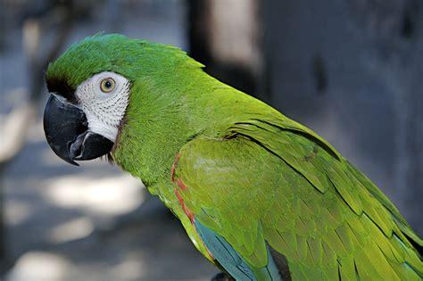 Loros: TODO acerca de la Mejor Ave de Compañía   Aves Exóticas