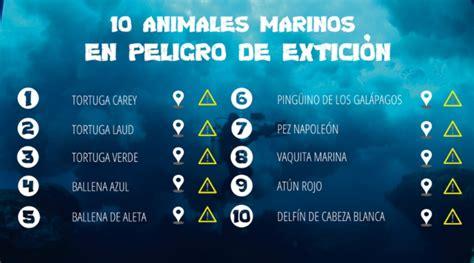 Los 10 animales marinos en peligro de extinción   Teacher ...