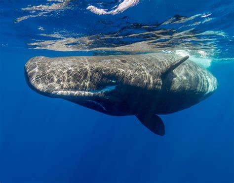 Los 10 animales marinos más grandes del mundo