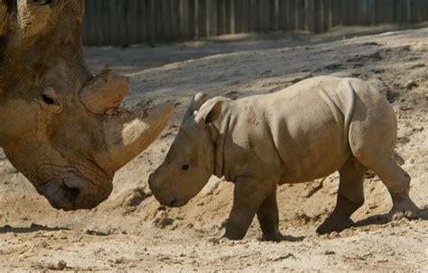 Los 10 mejores sitios para ver animales en semilibertad ...