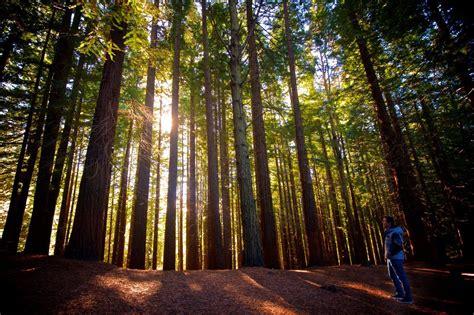 Los 15 tipos de biomas  y sus características