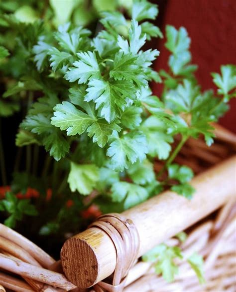 Los 5 beneficios de tener plantas aromáticas en tu jardín
