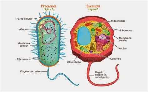 Los 6 tipos de células  y sus características
