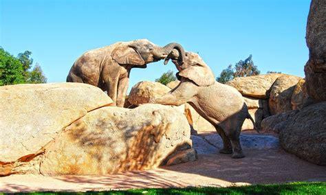 Los 8 mejores zoológicos de España para disfrutar de los ...