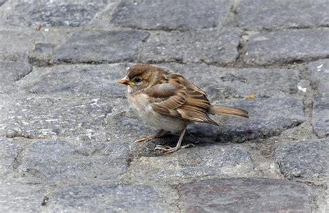 Los Agentes Rurales intervienen 915 aves de comercio ...